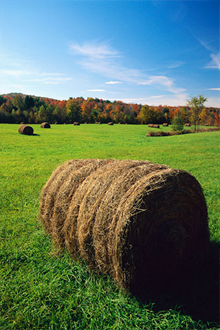 bales with blue sky