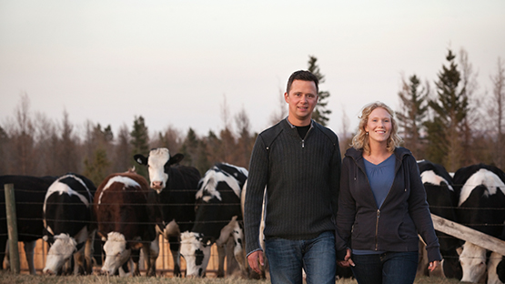 Farm couple with cows