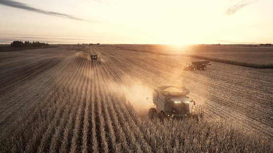 Combines working in a corn field during harvest